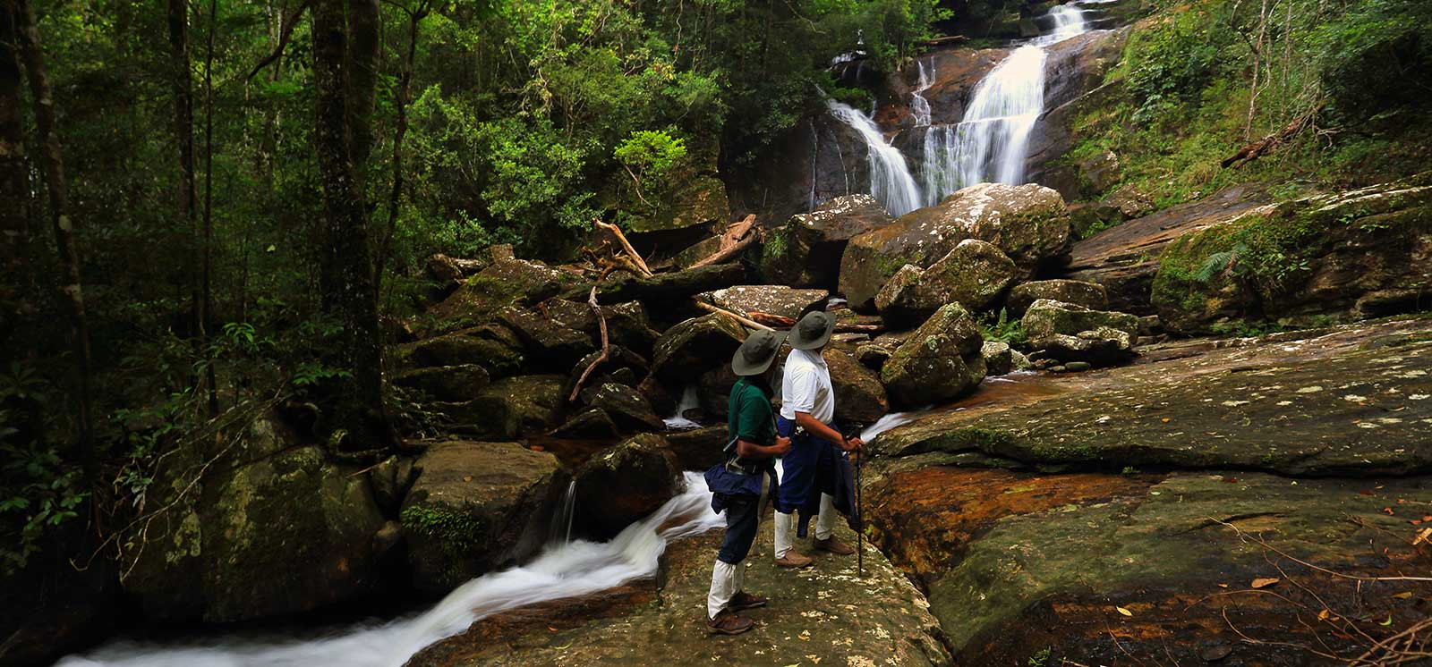 sinharaja forest The sinharaja forest reserve is a 6092 hectare national park located in sri  lanka the sinharaja forest is one of sri lanka's last remaining undisturbed.