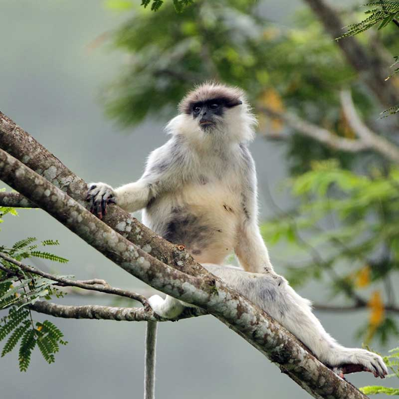 Monkey resting on a branch in the forest