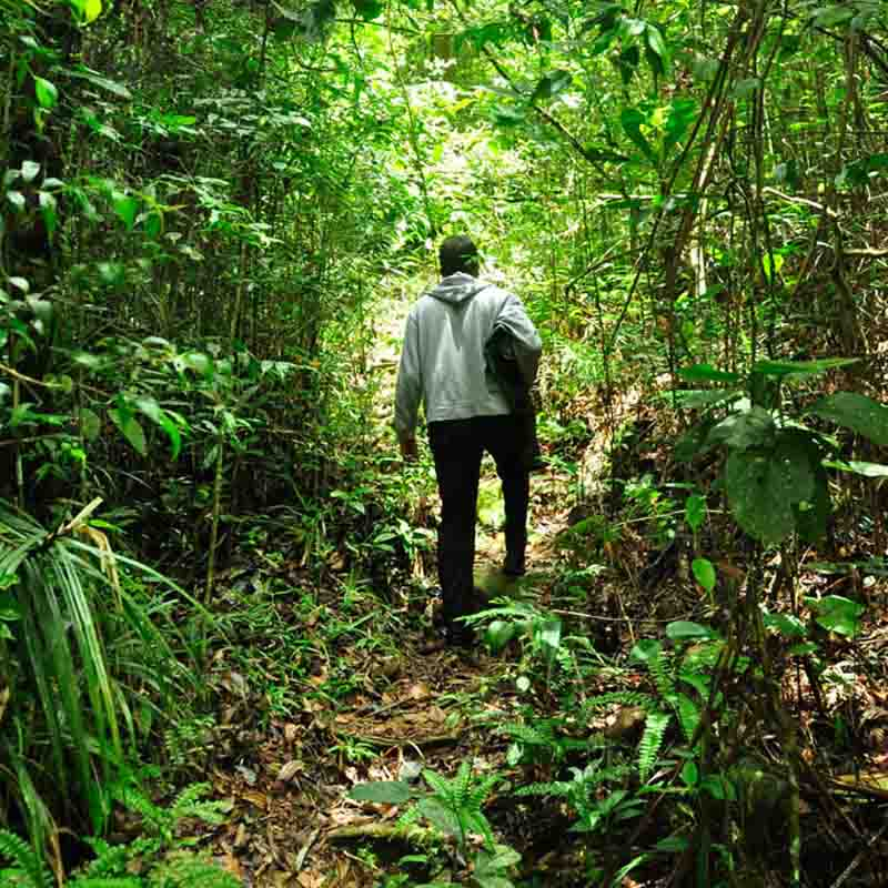 Trekking session in the Sinharaja forest