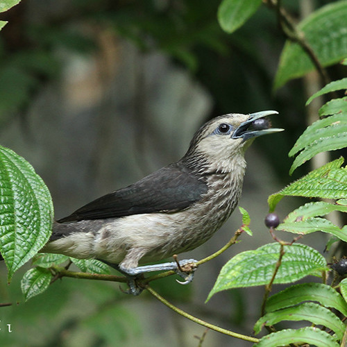 Bird feeding on a branch