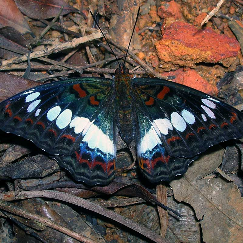 Closeup photo of a butterfly