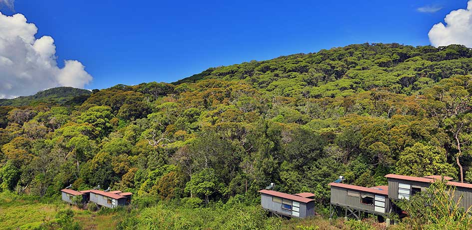 Dense forest surrounding the Chalets