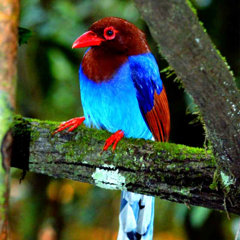 Exotic birds of the Sinharaja rain forest