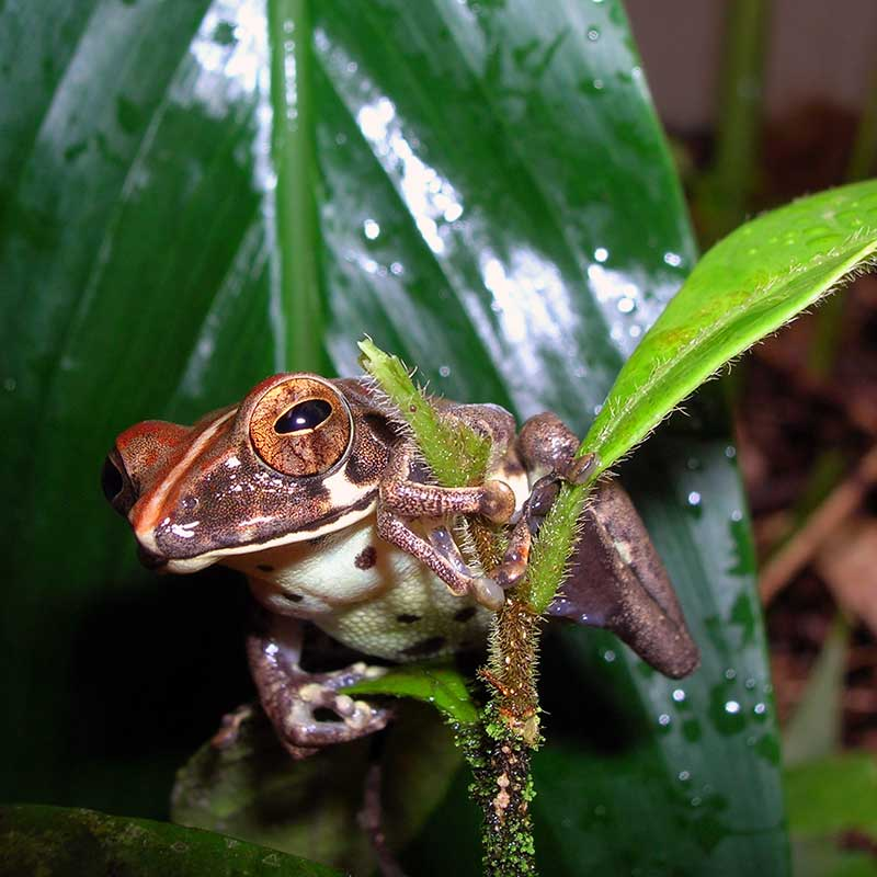Frog latching onto a leaf