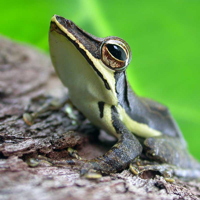 Frog resting on a branch