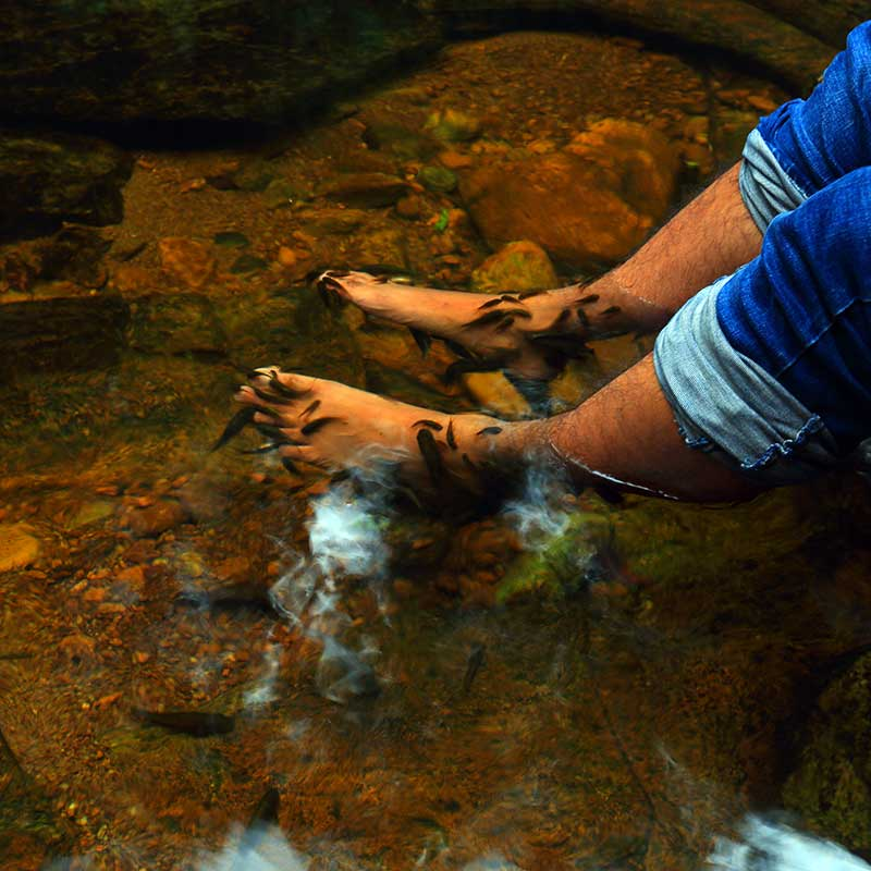 Fish therapy in the forest