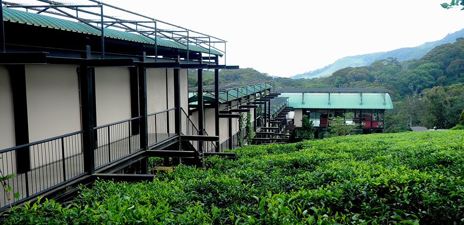 View of the hotel surrounded by tea plants