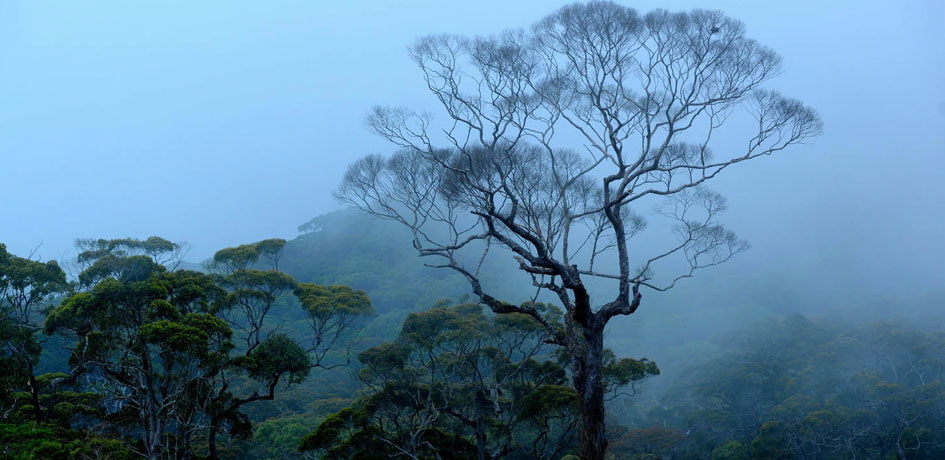 Amazing, mist rain forests of the Sinharaja