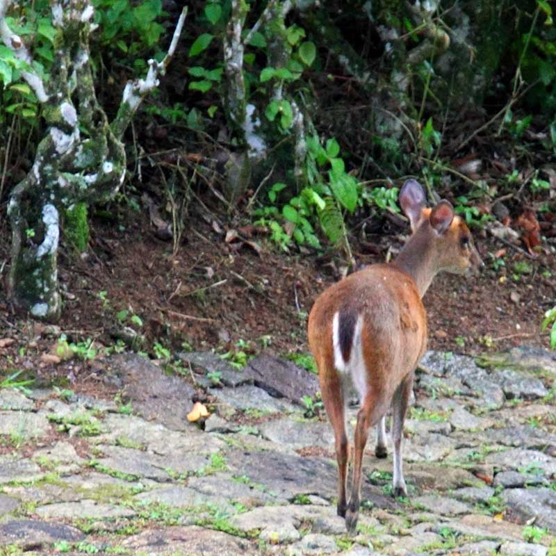 Baby deer in the forest