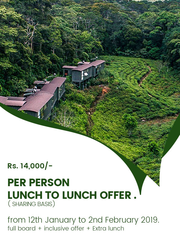 special-promotion-rainforest-ecolodge